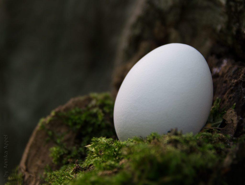 Das-Ei-Futterblatt