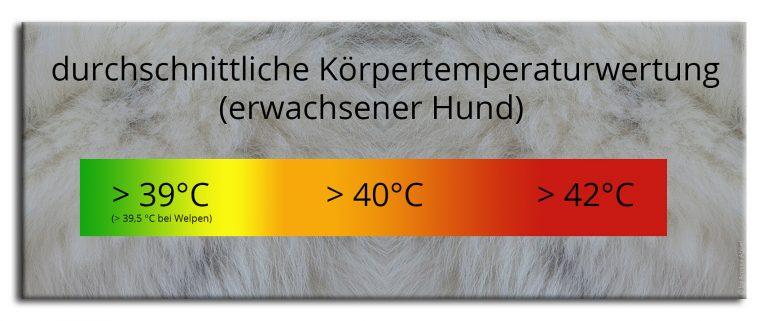 durchschnittliche Grundtemperatur Hund